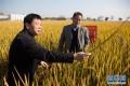 """国家科技奖3项授予""""水稻科学家"""",预示百姓饭碗将发生哪些革命?"""
