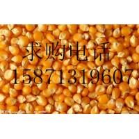 旺川求购玉米高粱荞麦棉粕