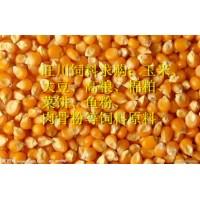 旺川求购玉米高粱荞麦大豆棉粕