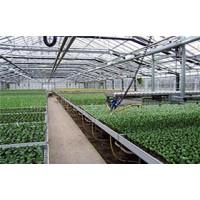 河南温室大棚讲述遮阳网的注意事项和发挥作用