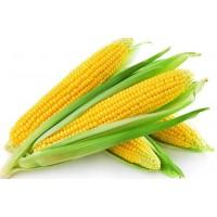 宁夏凯源现货玉米膳食纤维 玉米纤维粉 1公斤起订