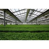 温室结构设计规范化_大棚建设需要做到哪些