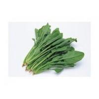 供应 菠菜粉   菠菜速溶粉 菠菜提取物 1公斤起订