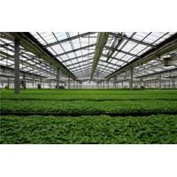 如何正确的使用遮阳网覆盖温室大棚