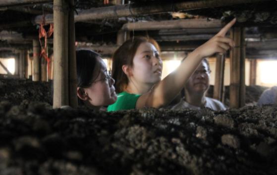 走进食用菌厂,投身实践觅真知-开启暑期社会实践新篇章-之伊川县食用菌调研
