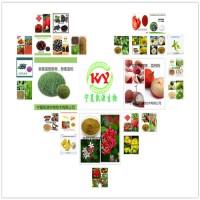 豌豆膳食纤维 豌豆膳食纤维粉 1公斤起订多种提取规格