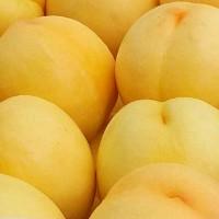 黄桃苗 黄桃苗品种 黄桃树苗批发