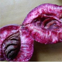 潍坊新品种桃树苗紫桃树苗价格